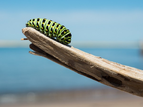Caterpillar - your website must transform visitors into prospects and prospects into customers.